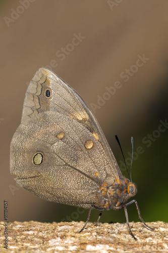Fotobehang Vlinder black and orange butterfly in vertical close-up