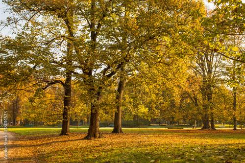 In de dag Milan Autumn in Sempione Park in Milan, Italy.