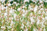 Kunterbunte Blumen, als Schnittblumen, Strauss und im Garten - 181115733