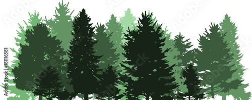 green fir dense forest on white