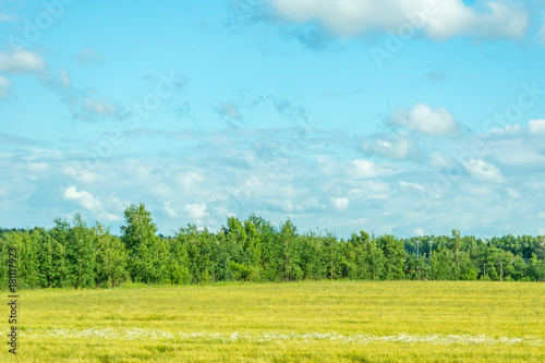 Fotobehang Zomer countryside rural scenery. Field and forest under blue sky