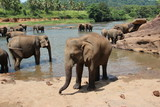 A family of elephants in elephant nursery