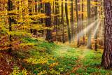 Herbstwald mit Sonnenstrahlen - 181131380