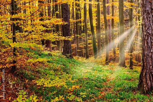 Foto op Plexiglas Oranje Herbstwald mit Sonnenstrahlen