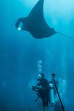 manta ray and diver - 181135954
