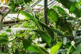 Tropical Foliage In A Botanical Garden - 181140982
