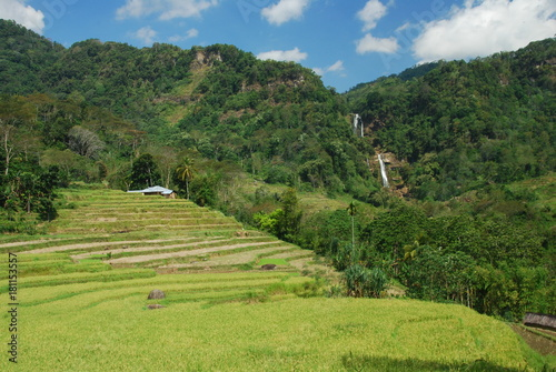 Keuken foto achterwand Rijstvelden Cascades de Tengku Lese près de Ruteng, île de Florès, Indonésie