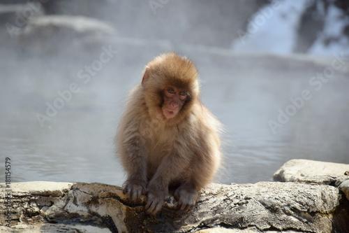Fotobehang Aap 地獄谷野猿苑の子猿