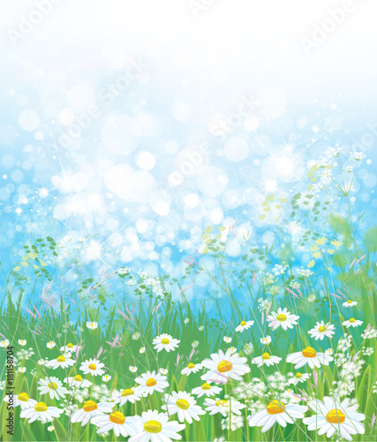 Naklejka Vector nature background, chamomiles field and blue sunny sky.