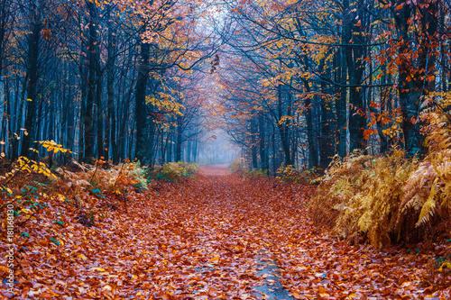 Fotobehang Weg in bos Ormanda sonbahar