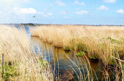 Leinwandbild Motiv einsames Ufer an der Schlei mit Schilfgürtel und Möwen in Schleswig-Holstein