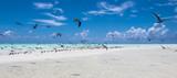 paradise beach with group of tropical birds