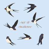 Set of simple swallows - 181187946