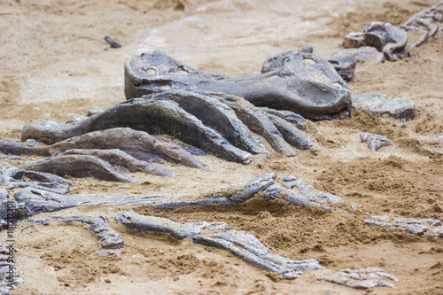Plagát replica dinosaur fossil on the sand ground for learning about, Excavating dinosaur in the park
