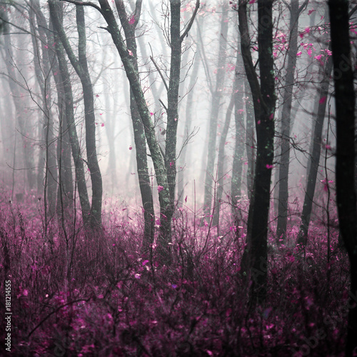 wild forest in the morning dense fog with magic and a riddle in it