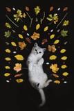 cat, white, pet