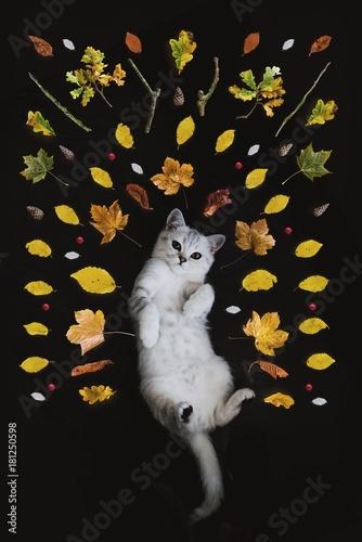 Fotobehang Kat cat, white, pet