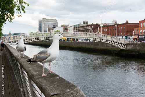 Travel in Ireland. Dublin, Ha'penny bridge