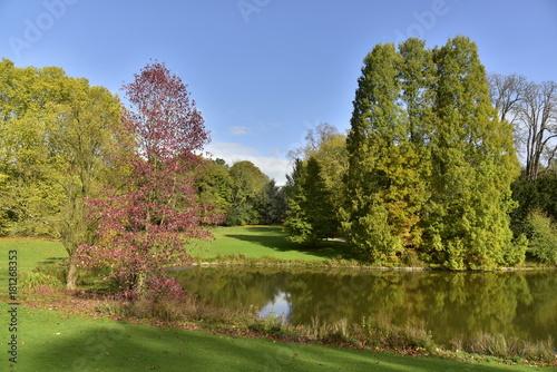 Fotobehang Pistache Petit arbres à feuillage bordeaux près des spécimens majestueux au bout de l'étang de l'Orangerie au Jardin Botanique à Meise