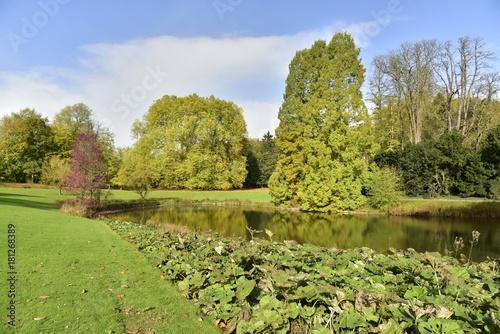 Poster Pistache Végétation le long des berges de l'étang de l'Orangerie au Jardin Botanique National de Belgique à Meise