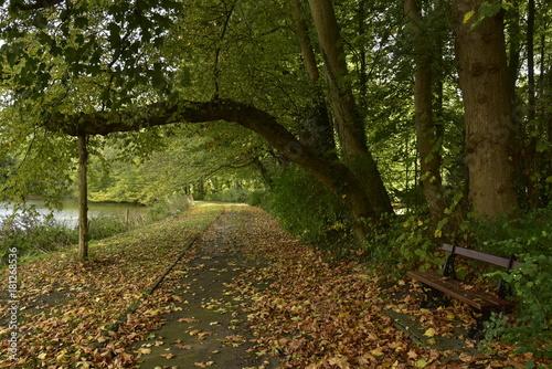 Fotobehang Weg in bos Chemin longeant l'étang de l'Orangerie au Jardin Botanique National de Belgique à Meise