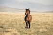 Stallion - 181268701