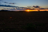 Sunset with silhouette of autumn tree in large field