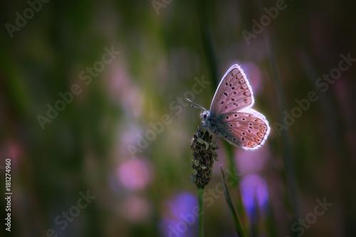 Fotobehang Vlinder Papillon lumineux