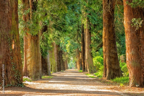 Fotobehang Natuur Orman harika