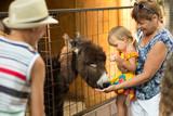 Contact zoo, grandmother with grandchildren look at animals - 181277344