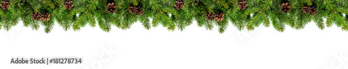 Evergreen branches on white - 181278734
