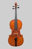 Viola   - 181288150