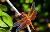 Dragonfly - 181297132