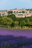 Village and lavender in Provence - 181298796
