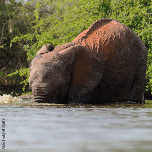 Sticker Elephants