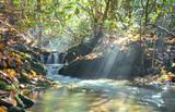 Creek Sunbeams