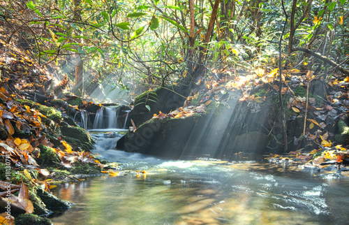 Creek Sunbeams - 181307113