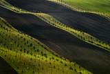 Moravian fields, Moravia, Czech Republic, around the village Kyjov  - 181310902