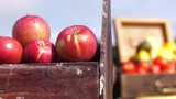 fruits and vegetables focus to apples in wooden box foreground 4k