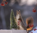 squirrel standing on ice with a tree