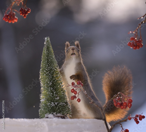 Fotobehang Natuur squirrel standing on ice with a tree
