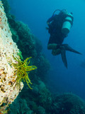 divers swims through a bright corals, underwater Philippines - 181326923