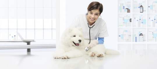 veterinary examination dog, smiling veterinarian with stethoscope on table in vet clinic