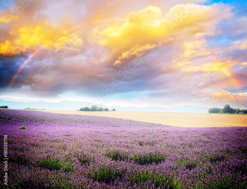 landscape of plateau Valensol with Lavender flowers blooming field under sky with rainbow, Provence, France, retro toned