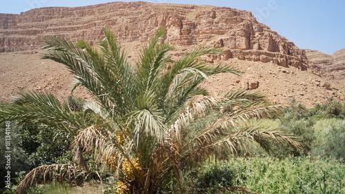 Staande foto Zalm Marokko