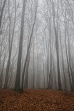 Nebel Wald  - 181343353