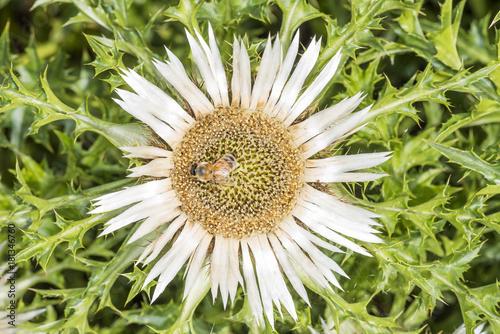 Aluminium Bee Biene