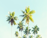 Coconut palms against the blue sky.  Toned image - 181364700