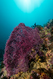 soft coral on a tropical reef - 181378598