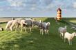 Leinwanddruck Bild - Deutschland,Niedersachsen,Krummhörn, der Leuchtturm von Pilsum.